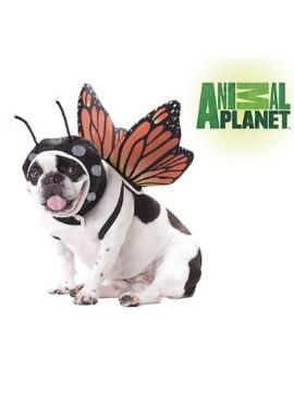 Animal-Planet-PET20101-Butterfly-Dog-Costume-0