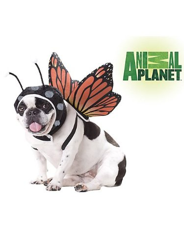 Animal Planet PET20101 Butterfly Dog Costume