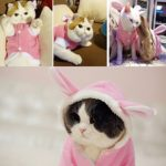 BroBear-Plush-Rabbit-Outfit-with-Hood-Bunny-Ears-for-Small-Dogs-Cats-Pink-0-1