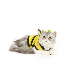 Bumblebee-Cat-Costume-0-0