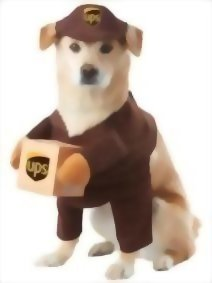 California-Costumes-UPS-Pal-Pet-Halloween-Costume-0