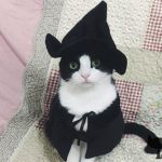 Cute-Hooded-Cloak-Witch-Wizard-Halloween-Holiday-Costume-for-Small-Dogs-Cat-Kitten-Cat-Costume-0-0