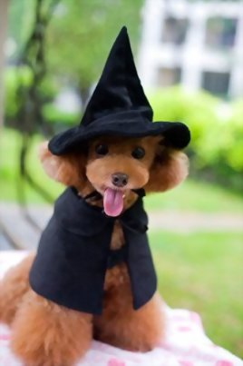 Cute-Hooded-Cloak-Witch-Wizard-Halloween-Holiday-Costume-for-Small-Dogs-Cat-Kitten-Cat-Costume-0-2