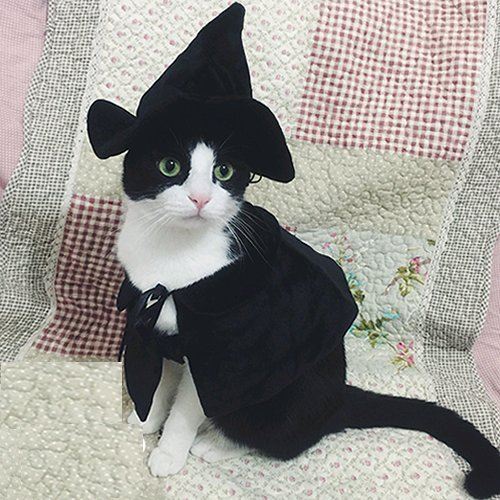 Cute-Hooded-Cloak-Witch-Wizard-Halloween-Holiday-Costume-for-Small-Dogs-Cat-Kitten-Cat-Costume-0