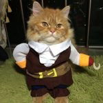 Hong-Fashion-Pirates-of-the-Caribbean-Design-Dog-Clothes-Costume-for-Dogs-and-Cats-0-0