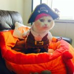 Idepet-Funny-Pet-Clothes-Pirate-Dog-Cat-Costume-Suit-Corsair-Dressing-up-Party-Apparel-Clothing-for-Cat-Dog-Plus-Hat-0-1
