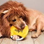 JOY4PETS-Lion-Mane-for-Dog-Frisbee-Premium-Quality-Realistic-Hilarious-Eye-Catching-Dog-Lion-Mane-Dog-Costume-with-Ears-Comfortable-Lion-Wig-for-Medium-and-Large-Dogs-Perfect-Dog-Gift-0-2