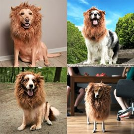 JOY4PETS-Lion-Mane-for-Dog-Frisbee-Premium-Quality-Realistic-Hilarious-Eye-Catching-Dog-Lion-Mane-Dog-Costume-with-Ears-Comfortable-Lion-Wig-for-Medium-and-Large-Dogs-Perfect-Dog-Gift-0-5