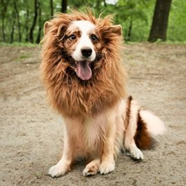 JOY4PETS-Lion-Mane-for-Dog-Frisbee-Premium-Quality-Realistic-Hilarious-Eye-Catching-Dog-Lion-Mane-Dog-Costume-with-Ears-Comfortable-Lion-Wig-for-Medium-and-Large-Dogs-Perfect-Dog-Gift-0-7