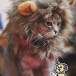 Lion-Mane-Costume-for-Cat-0-0