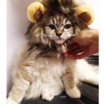 Lion-Mane-Costume-for-Cat-0-2