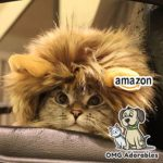 Lion-Mane-Costume-for-Cat-0-3