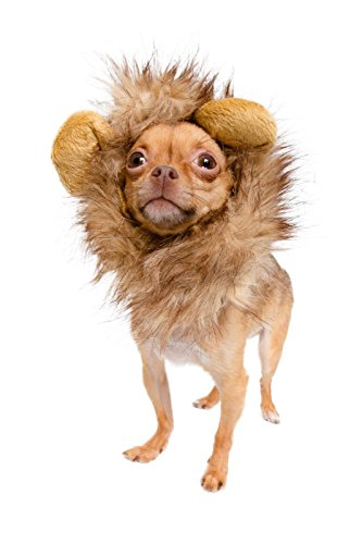 Lion-Mane-Costume-for-Cats-Dogs–FREE-Feathered-Catnip-Toy-Included–Cute-Halloween-Pet-Costume-for-Yorkies-Maltese-Puppies-Cats-Kittens-0-0