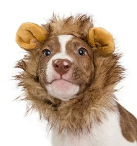 Lion-Mane-Costume-for-Cats-Dogs–FREE-Feathered-Catnip-Toy-Included–Cute-Halloween-Pet-Costume-for-Yorkies-Maltese-Puppies-Cats-Kittens-0-2