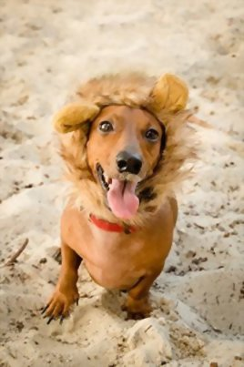Lion-Mane-Costume-for-Cats-Dogs–FREE-Feathered-Catnip-Toy-Included–Cute-Halloween-Pet-Costume-for-Yorkies-Maltese-Puppies-Cats-Kittens-0-4
