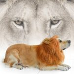 LionBuff-Lion-Mane-Costume-for-Dog-LionBuff-Dog-Wig-for-Holloween-Christmas-Party-Purchase-This-Item-Get-Your-Little-Lion-0-5