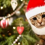 Prymal-Comfort-Santa-Dog-Cat-Costume-0-2