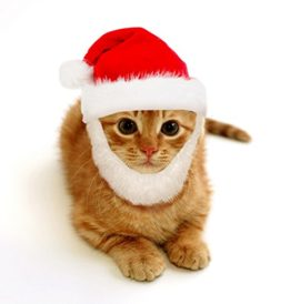 Prymal-Comfort-Santa-Dog-Cat-Costume-0