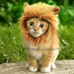Prymal-Lion-Mane-Dog-Cat-Costume-0-0