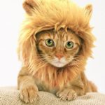 Prymal-Lion-Mane-Dog-Cat-Costume-0
