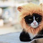 Prymal-Lion-Mane-Dog-Cat-Costume-0-3