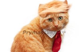 Prymal-Trump-Cat-Costume-for-Halloween-Festival-and-Parties-0