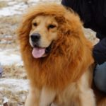 Sunreek-Large-Pet-Dog-Cat-Lion-Wigs-Mane-Hair-Festival-Party-Fancy-Dress-Clothes-Costume-0-1