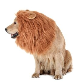 TOMSENN-Dog-Lion-Mane-Realistic-Funny-Lion-Mane-for-Dogs-Complementary-Lion-Mane-for-Dog-Costumes-Lion-Wig-for-Medium-to-Large-Sized-Dogs-Lion-Mane-Wig-for-Dogs-0