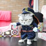 UEETEK-Funny-Dog-Cat-Jeans-Uniform-Pet-Clothes-Costume-Dress-Cosplay-for-Party-CanivalSize-S-0-1