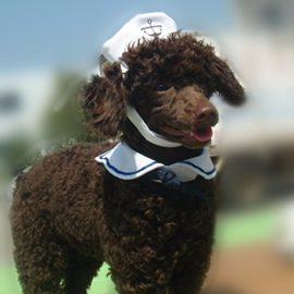 iEFiEL-Cats-Puppy-Rabbit-Pets-Cute-Sailor-Little-Captian-Costume-Outfit-Hat-Cape-Set-0-1