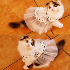 iPet-Princess-Floral-Cat-Party-Bridal-Wedding-Dress-Small-Dog-Flower-Tutu-Ball-Gown-Puppy-Dot-Skirt-Doggy-Photo-Apparel-Stretchy-Clothes-Mesh-Costume-for-Spring-Summer-Wear-0-0