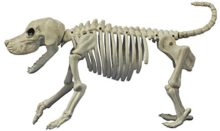Crazy-Bonez-Beagle-Bonez-Skeleton-0