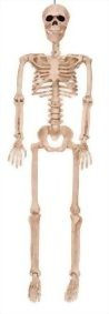 Crazy-Bonez-Posable-Skeleton-Decoration-36-0