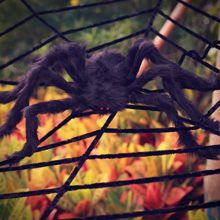 Halloween-Decorations-Hip2cart-10FT-Spider-Web-Decorations-and-Giant-Spider-Decorations-Outdoor-Indoor-0