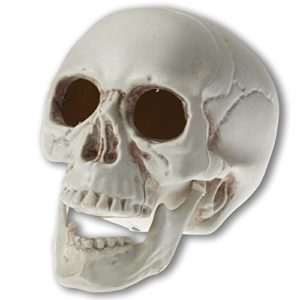 Prextex-65-inch-Realistic-Looking-Skeleton-Skull-for-Best-Halloween-Decoration-0