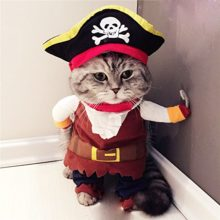 Cat Costumes for Halloween