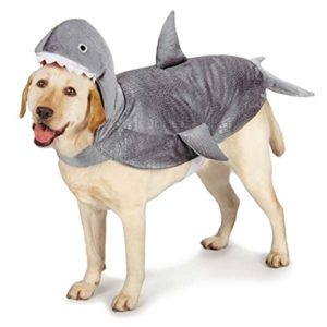 CASUAL-CANINE-SHARK-COSTUMES-0
