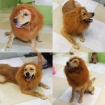CPPSLEE-Lion-Mane-Wig-Costume-Make-Your-Dog-Lion-King-Adjustable-Washable-Comfortable-Fancy-Lion-Hair-Dog-Clothes-Dress-for-Halloween-Brown-With-tail-ear-0-0