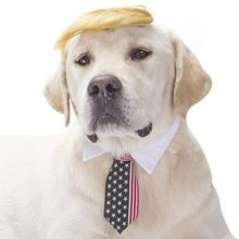 Dog-costumes-pets-wigs-accessories-stars-stripes-pet-necktie-for-halloween-0