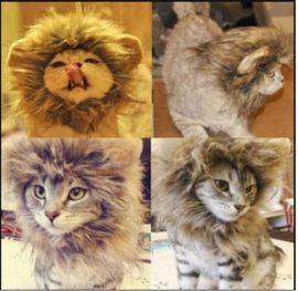 LionBuff-Lion-Mane-Cat-Costume-with-Ears-Christmas-or-Halloween-Wig-Cosplay-Costume-Like-Get-Buff-from-Lion-0-0