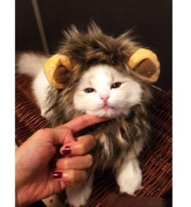 LionBuff-Lion-Mane-Cat-Costume-with-Ears-Christmas-or-Halloween-Wig-Cosplay-Costume-Like-Get-Buff-from-Lion-0-2