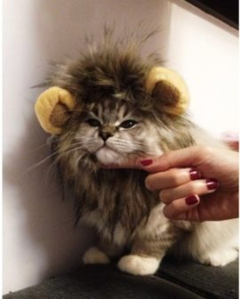LionBuff-Lion-Mane-Cat-Costume-with-Ears-Christmas-or-Halloween-Wig-Cosplay-Costume-Like-Get-Buff-from-Lion-0