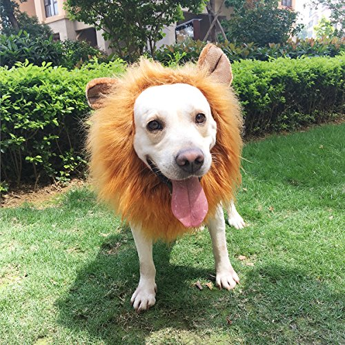 PBPBOX-Dog-Lion-Mane-with-Open-Ears-Adjustable- & PBPBOX Dog Lion Mane with Open Ears Adjustable Wig Halloween Pet ...