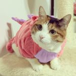 Pet-Plush-Outfit-Dinosaur-Costume-with-Hood-for-Small-Dogs-Cats-Jumpsuit-Winter-Coat-Warm-Clothes-0-0