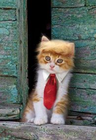 Trump-Style-Pet-Costume-Cat-Wig-Donald-Dog-Clothes-with-Collar-Tie-Head-Wear-Apparel-Toy-for-Halloween-Christmas-parties-festivals-by-FMJI-0