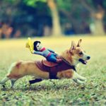 Pet-Costume-Dog-Costume-Pet-Suit-Cowboy-Rider-Style-by-DELIFUR-0-7