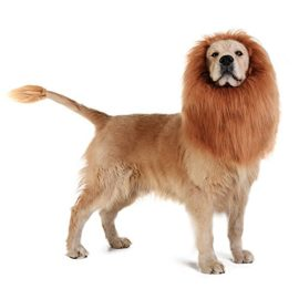 TOMSENN-Dog-Lion-Mane-Realistic-Funny-Lion-Mane-for-Dogs-Complementary-Lion-Mane-for-Dog-Costumes-Lion-Wig-for-Medium-to-Large-Sized-Dogs-Lion-Mane-Wig-for-Dogs-0-2